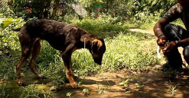 Este-perro-tenia-su-cuerpo-cubierto-de-asfalto