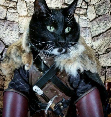 Costumi di carnevale per cani e gatti bigodino for Dove hanno girato il trono di spade