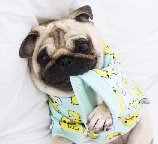 Con un tenero pigiamino...
