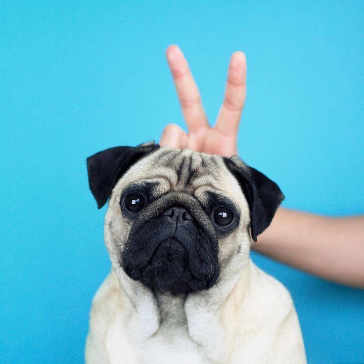 Simpatici i padroni di LouLou the Pug...