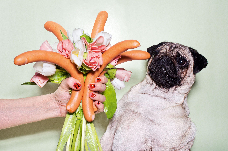 LouLou the Pug non ama fiori, ma i wurstel?