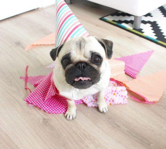 Il compleanno di LouLou the Pug