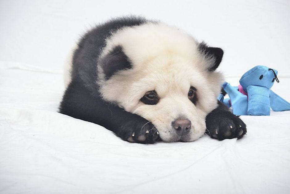 I Pandog