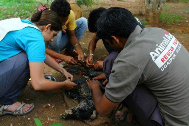 Voluntarios-ayudando-a-un-perro