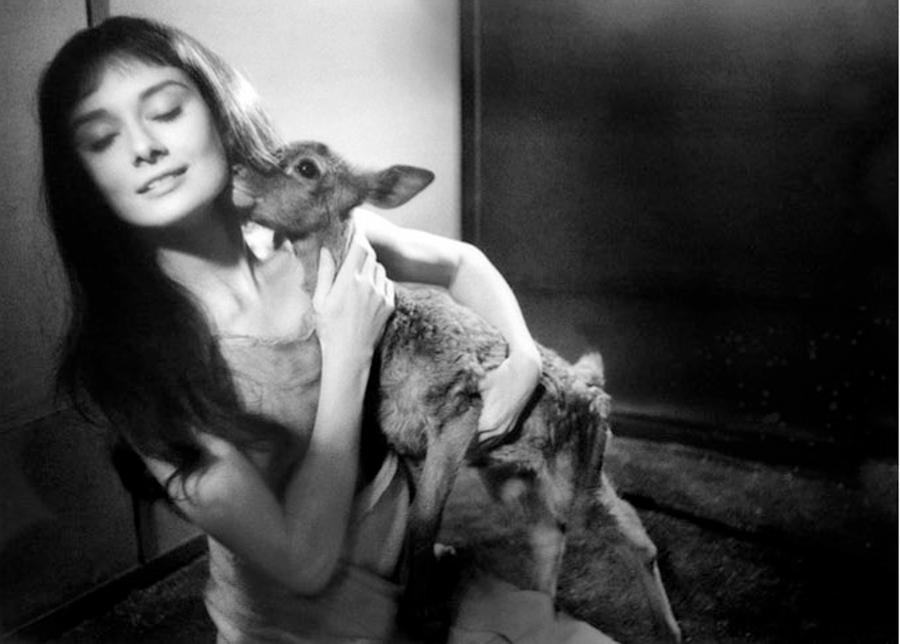 Audrey e il suo cerbiatto