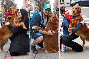 Il cane che non riesce a smettere di abbracciare chi incontra per strada