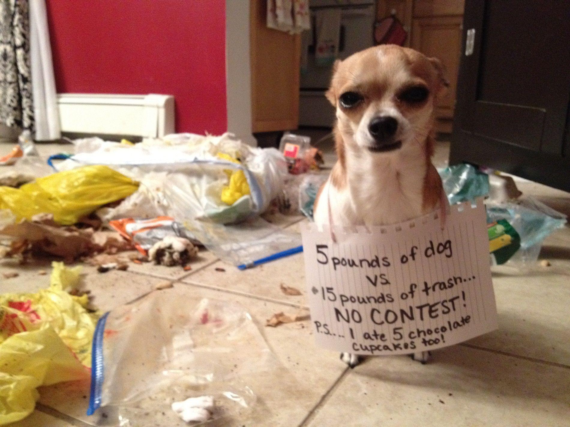 Cane colpevolissimo!