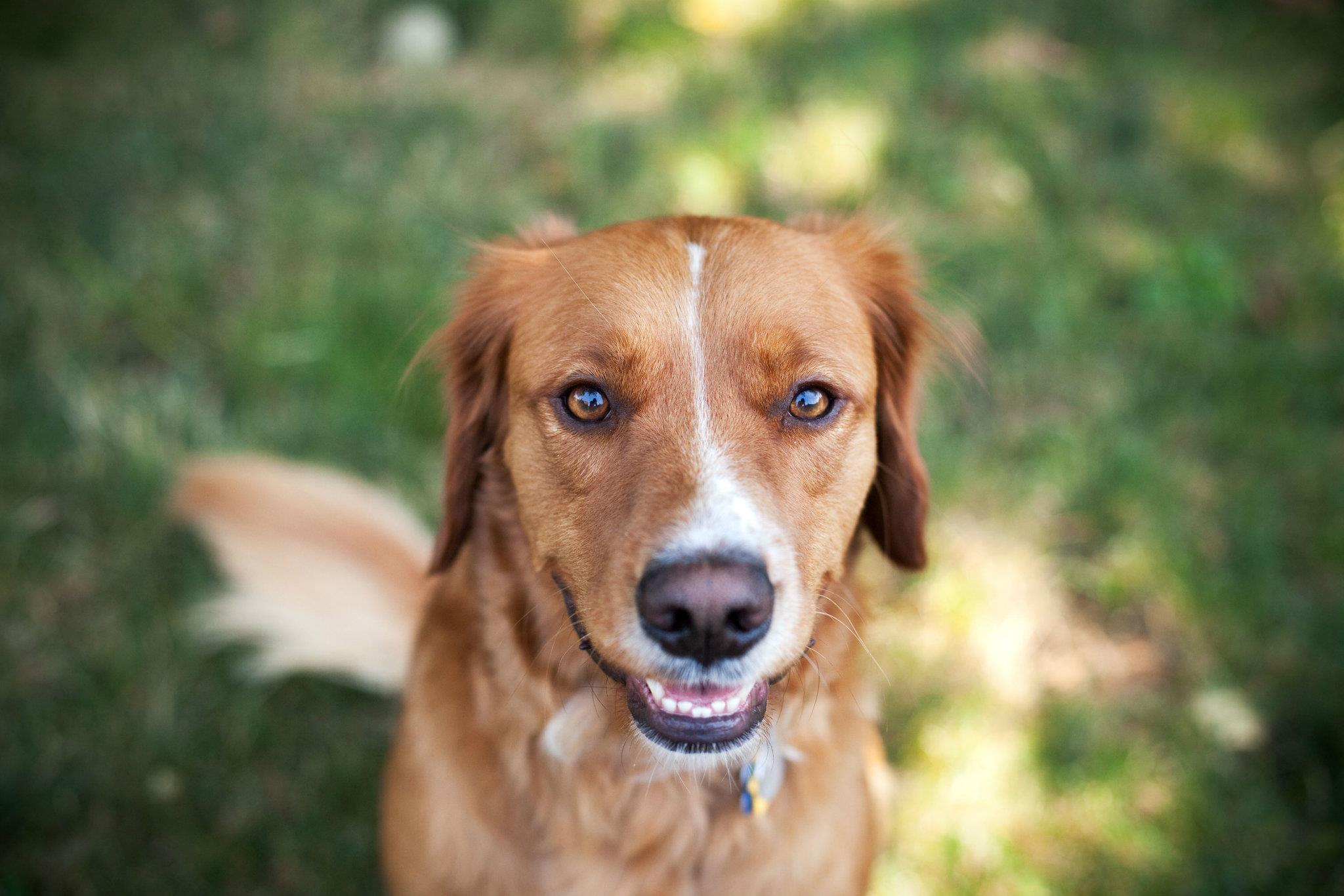 5 cose che i cani potrebbero prevedere prima che accadano