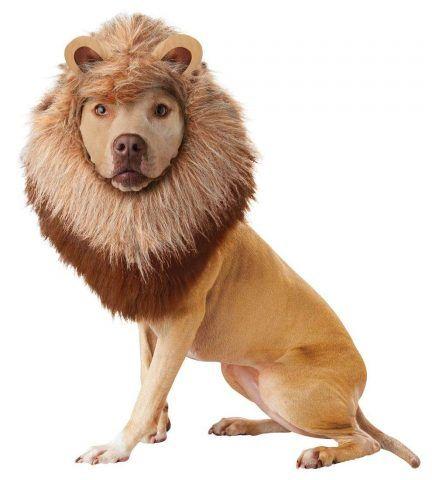 Il leone