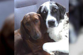 Il cane adottato non vuole lasciare il rifugio senza il suo amico a quattrozampe