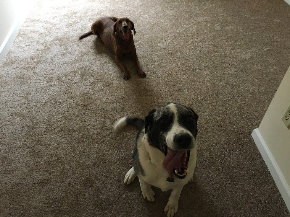 Sully e Lucy