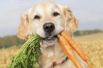 Cosa possono mangiare i cani e cosa non devono mangiare