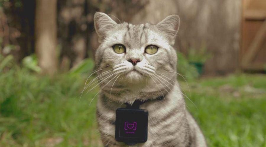 cani-gatti-smart