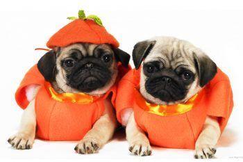 Le tradizioni di Halloween da tutto il mondo