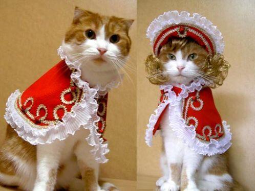 Gatti in stile francese