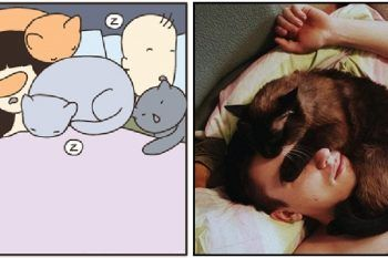 Perché i gatti preferiscono dormire addosso a noi?