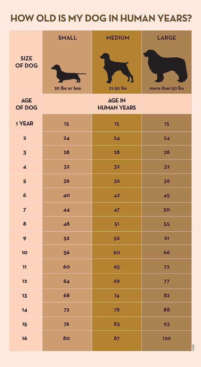 Come si calcola l'età dei cani