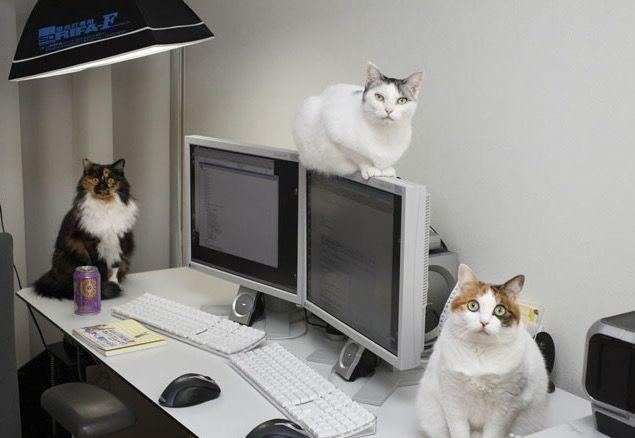 In ufficio con i gatti