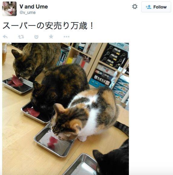 I felini possono girare liberamente in azienda