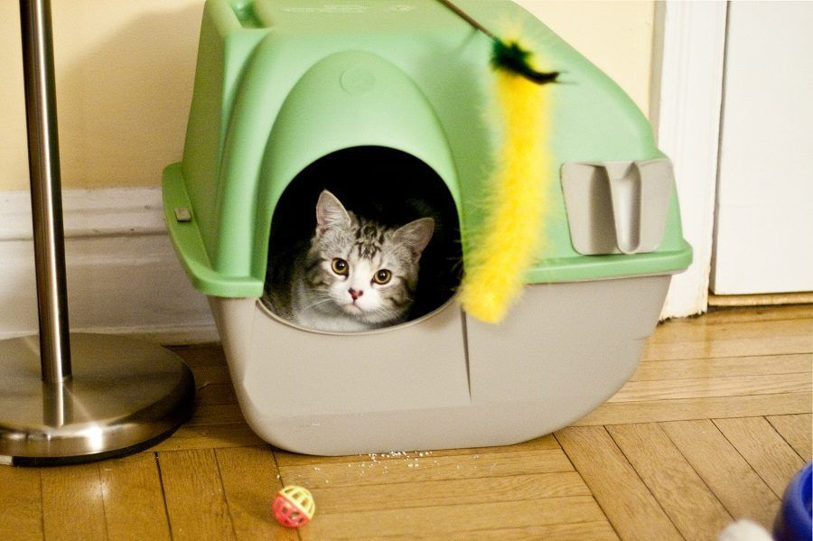 Lettiera chiusa, non tutti i gatti la amano. O la usano nel modo giusto