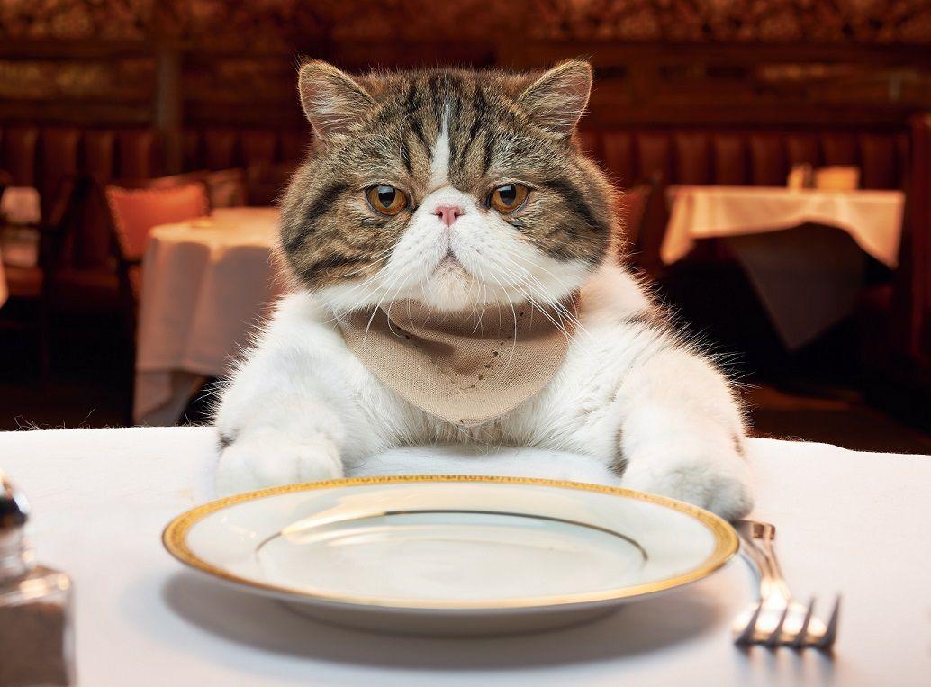 Cosa c'è per cena?