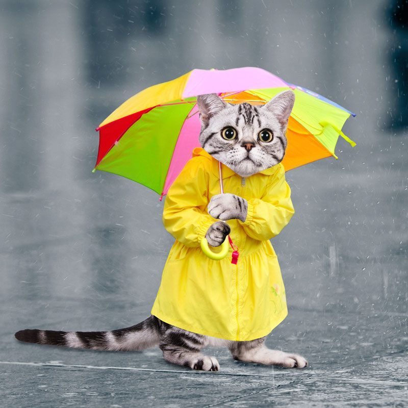 Te l'avevo detto che il tempo sarebbe peggiorato!