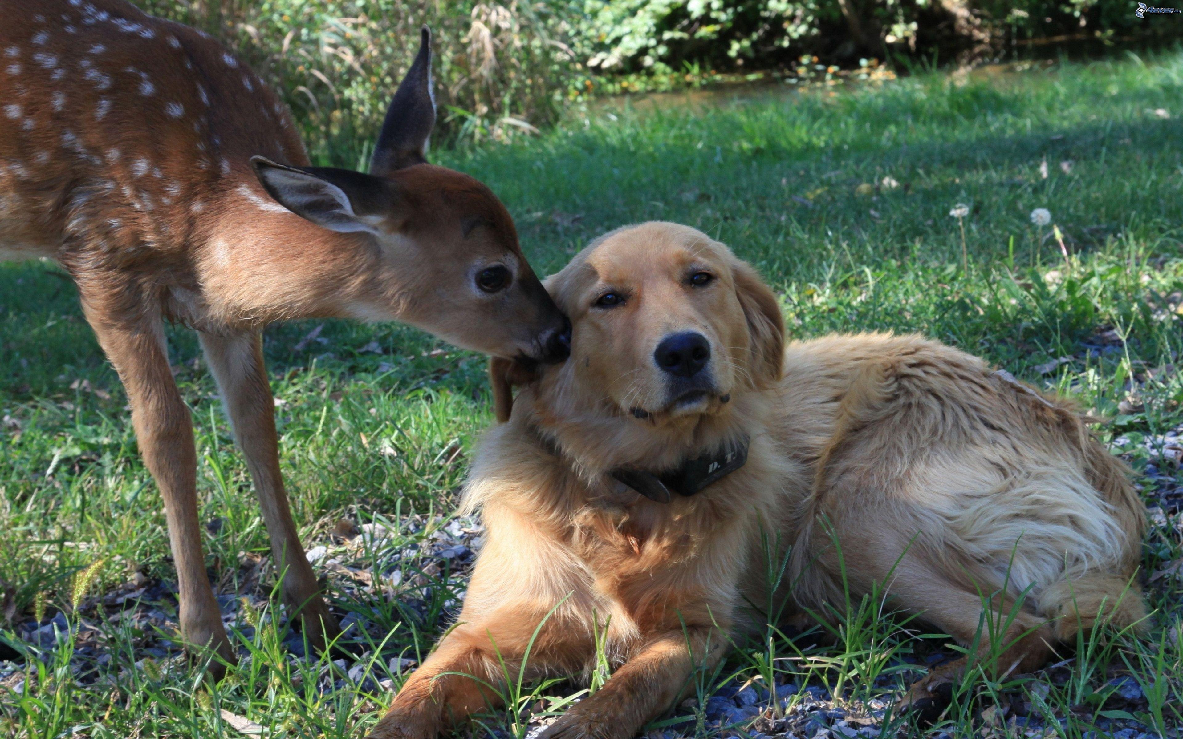 Quando incontrano nuovi amici