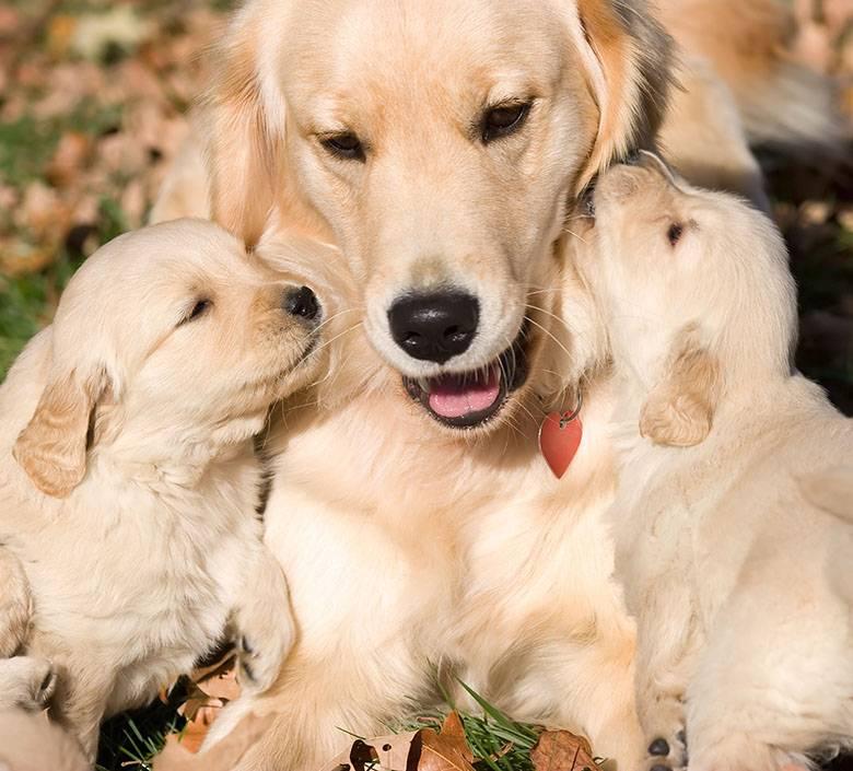 Quando sono cuccioli e cercano le coccole