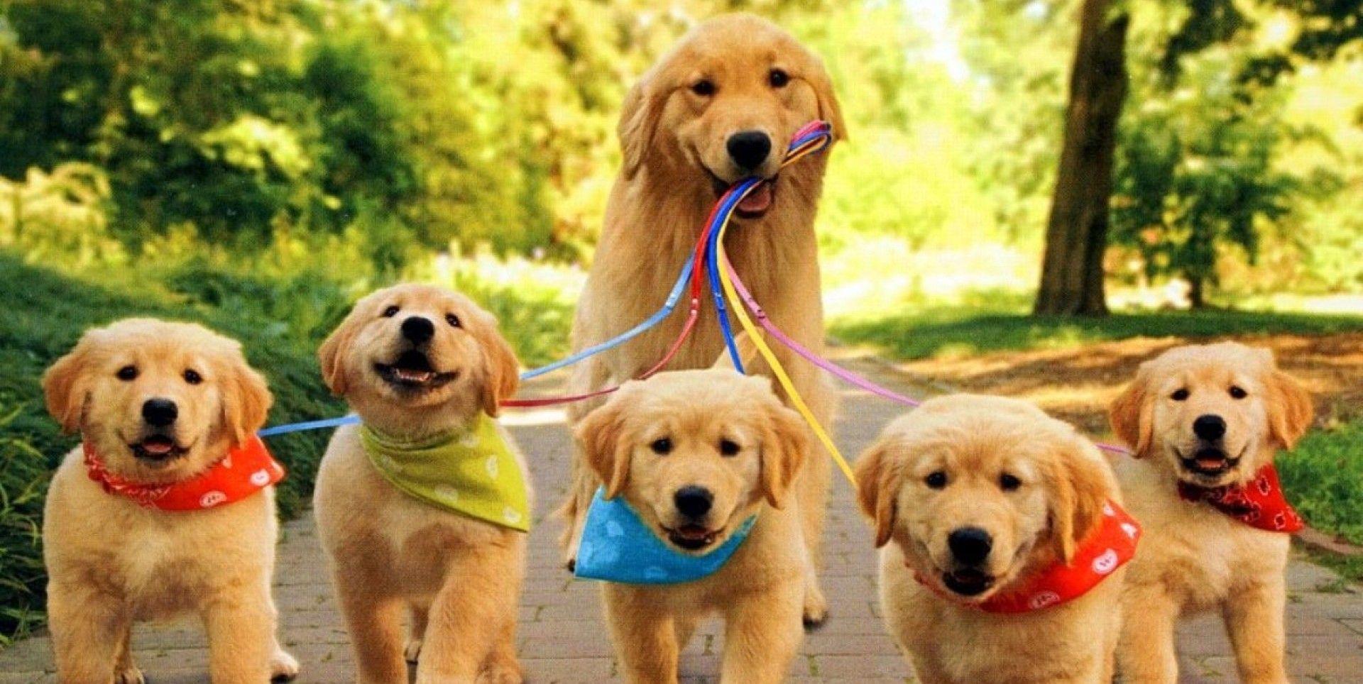 Quando andiamo a passeggiare con loro