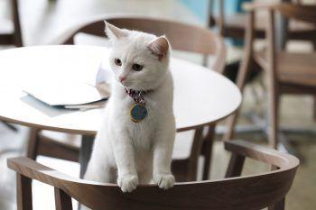 In Europa alla ricerca dei Cat Café più esclusivi