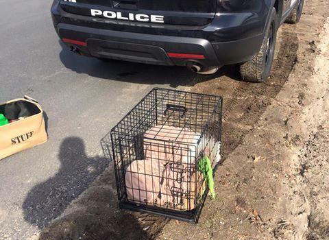 Povero cucciolo abbandonato!