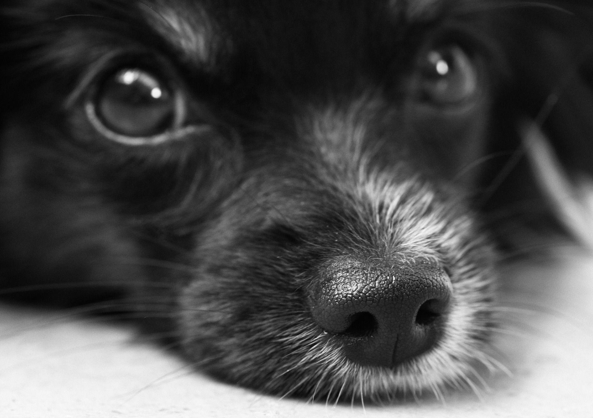 Il cane ci capisce subito!