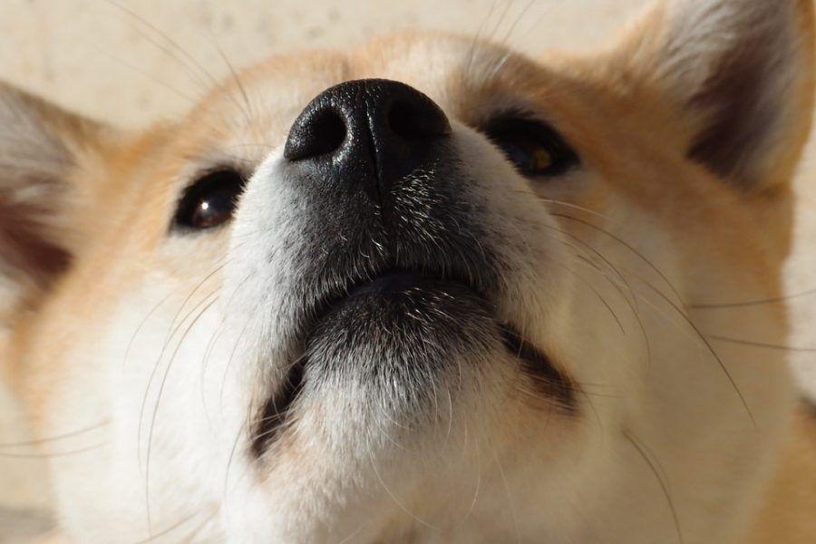 Com'è il naso del vostro cane?