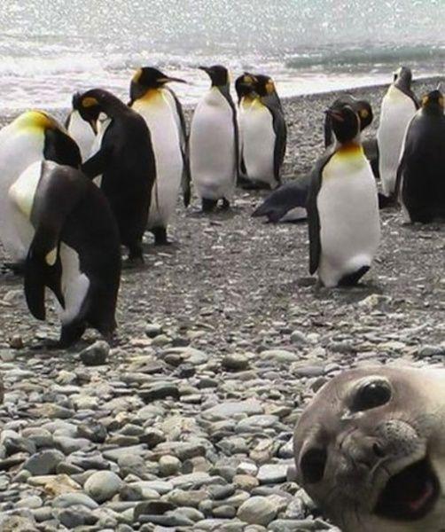 Foto ai pinguini... con foca imbucata!