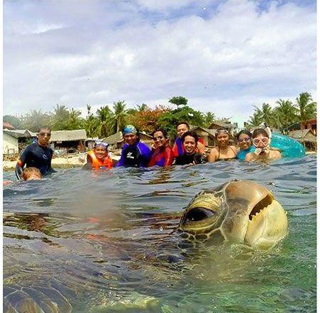 Che simpatica questa tartaruga...