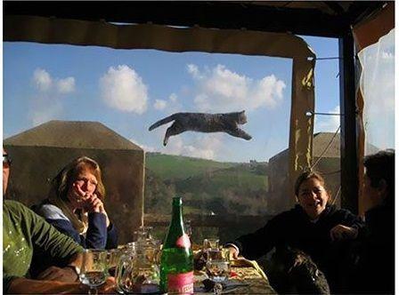Il gatto volante...