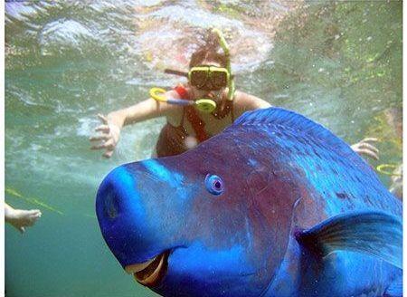 Come immortalare un pesce sott'acqua.