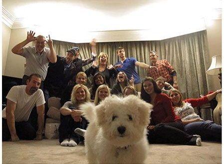 Cane protagonista assoluto della foto!
