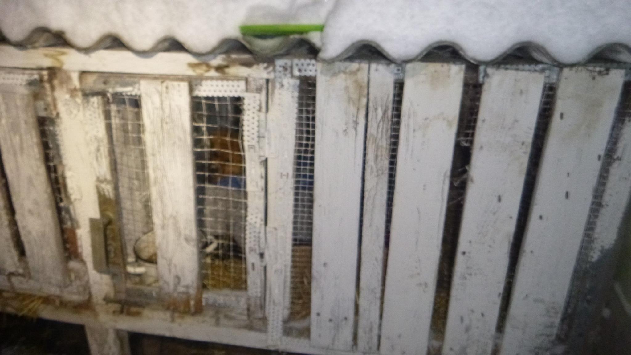Il Freddo Quando Arriva una cagnolina e i suoi cuccioli sono stati buttati al freddo