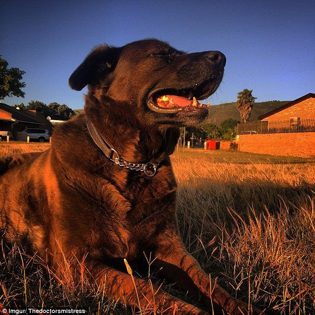 3E203BB600000578-4299994-Cash_s_liver_and_kidneys_have_been_failing_and_have_kept_the_dog-a-1_1489130188191