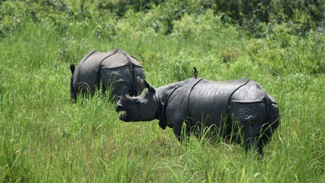 _94228216_rhinos_getty