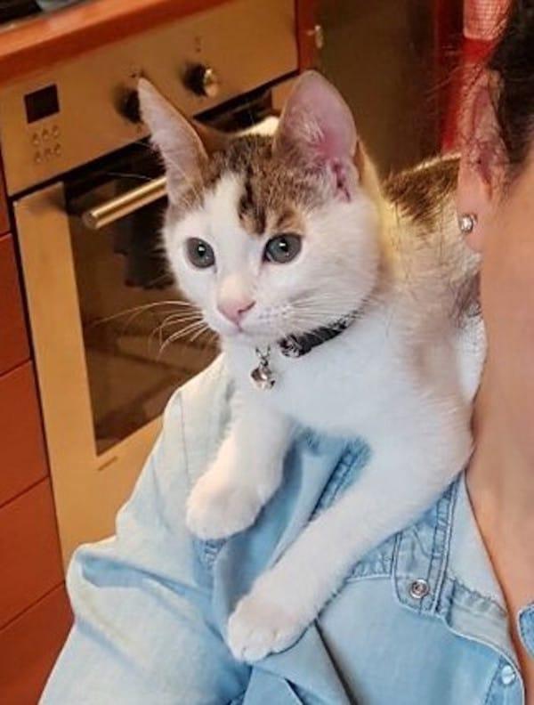 Rare-Calico-Boy-Kitten-6-600x792