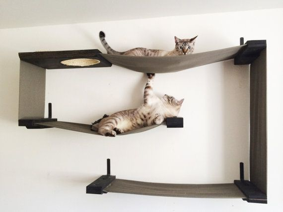 Labirinto per gatti