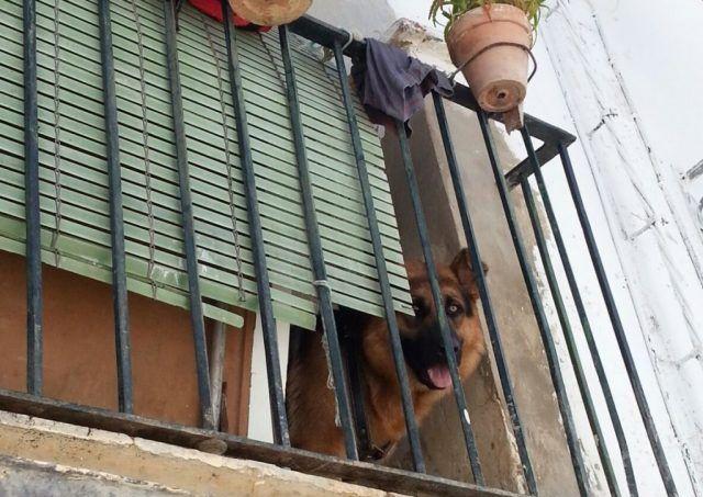 brutal-paliza-a-su-perro-en-el-balcon-de-su-casa-en-jabugo-huelva-1024x724