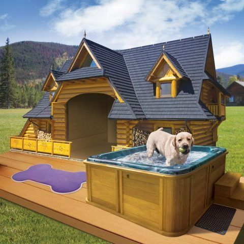Cuccia di design per cani con piscina