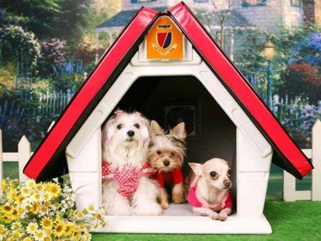 Cuccia di design per cani a forma di baita