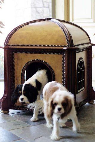 Cuccia di design per cani a regale