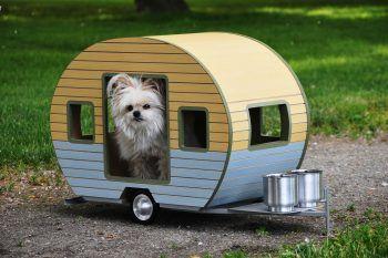 Le cucce di design per cani più originali