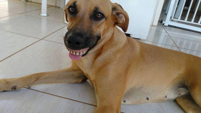 dog-finds-fake-teeth-pandora-1-58b3f76e0bedf__700