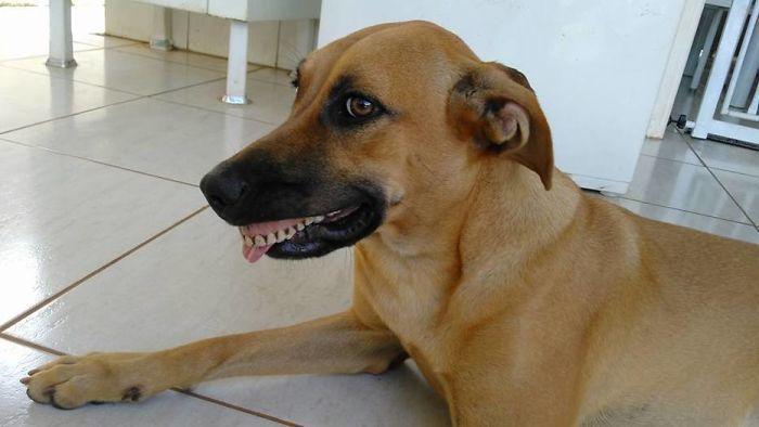 dog-finds-fake-teeth-pandora-2-58b3f77496970__700